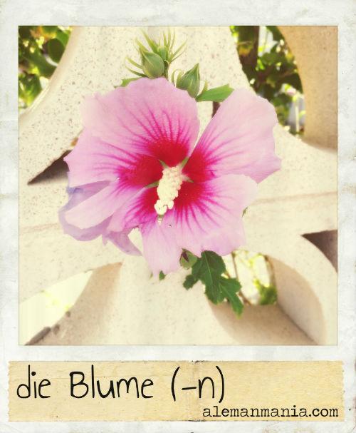 Die Blume