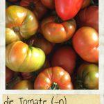 Tomate, die. Rote und grüne Tomaten