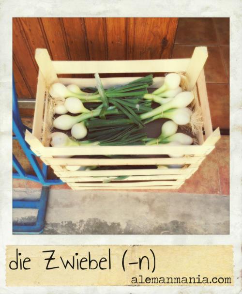 Die Zwiebel. Frische Zwiebeln, frisches Gemüse